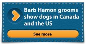 Barb Hamon grooms show dogs in Canada and the US